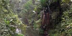 Regenwald auf Madagaskar