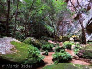 Tropischer Regenwald Madagaskar