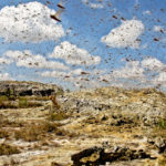1_madagascar-locust-Road-trip-RN7-298