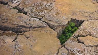 Biodiversität_Madagaskar