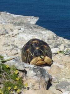 Cap Sainte Marie