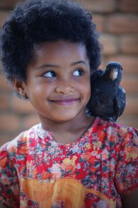 Rabenpapagei aus Madagaskar