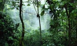 Dschungel Madagaskar