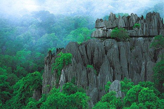 Forêt Madagascar