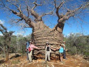 Baobab Westküste
