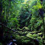 Die Flora der verschiedenen Biotopen