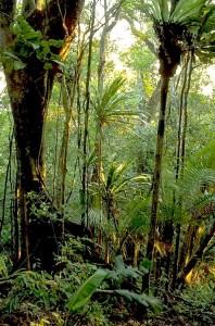 Masoala_Regenwald.in_Madagaskar