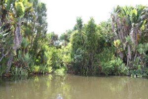 Vegetation Pangalan Kanal