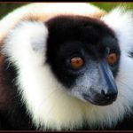 Lemuren auf Madagaskar