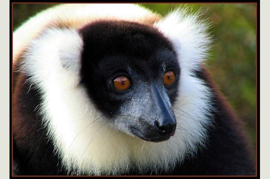lemurien-269003