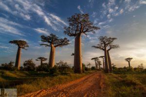 DiePrachtderPiste Baobaballee (2)