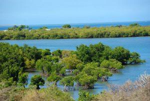 Mangroven Sarondrano
