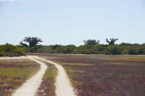 Piste Westküste Madagaskar