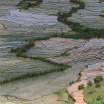 Reis Kultur auf Madagaskar