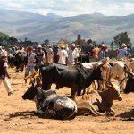Die Volkstämme auf Madagaskar-die Betsileo