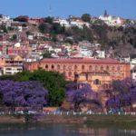antananarivo Jacaranda Blüten