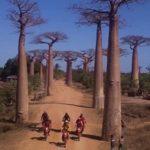 moto-tour-allee-baobabs_500x700