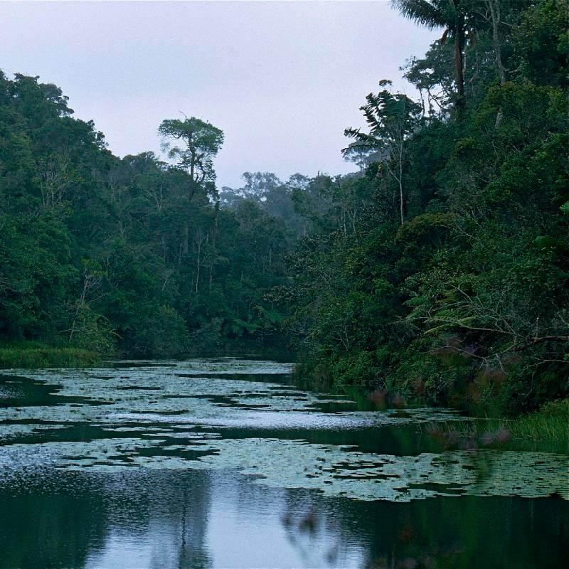 Analamazoatra Madagaskar