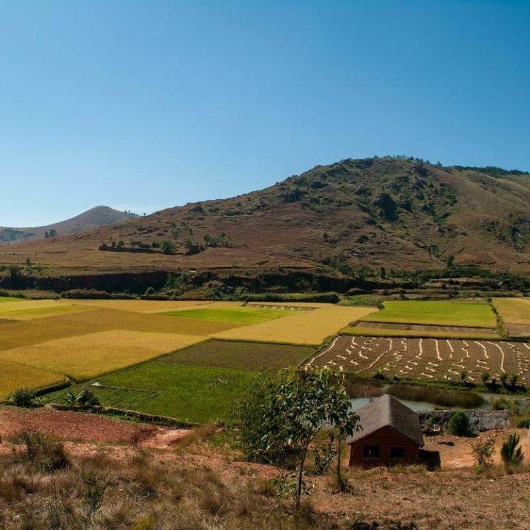 Nutzpflanzen Madagaskar