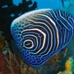 Korallen Fisch