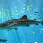 Walhaie in Madagaskar beobachten