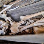 Besessenheits- und Exorzismusrituale in Madagaskar