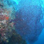 Die Vielfalt der Korallen in Madagaskar