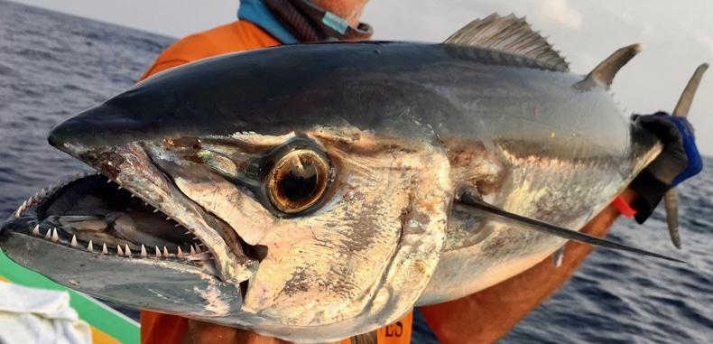 Madagaskar Sportfischen