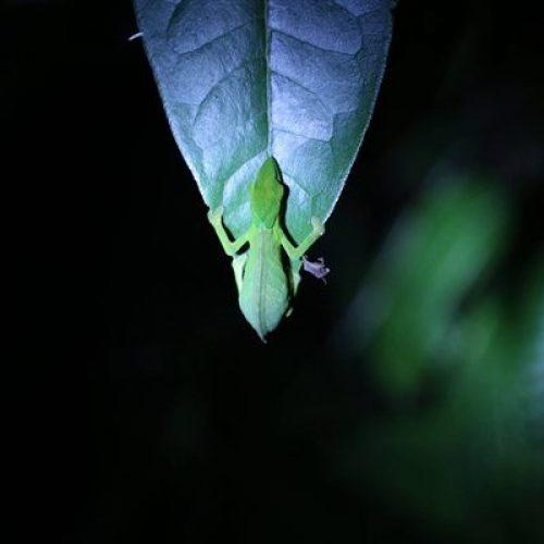 Ranomafana bei Nacht