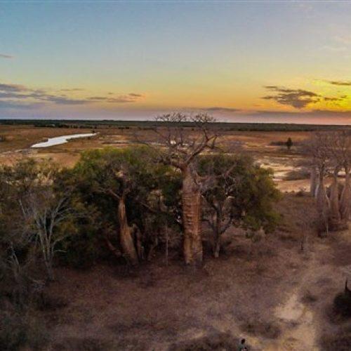 Lodge de la saline Baobabs