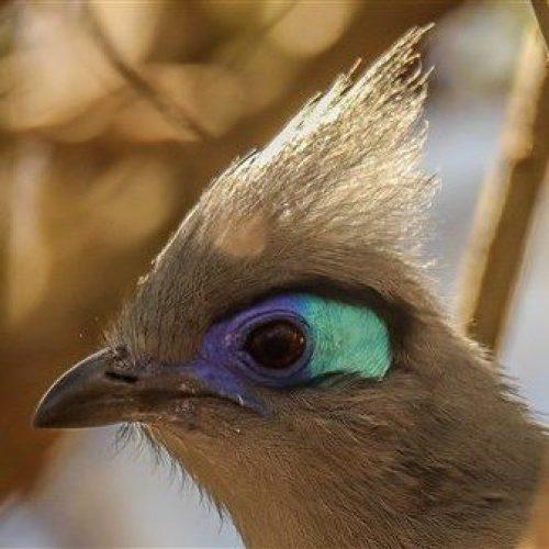 Lodge de la saline Vögel