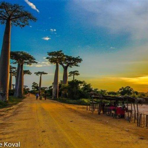 Baobab Allee-Affenbrotbäume