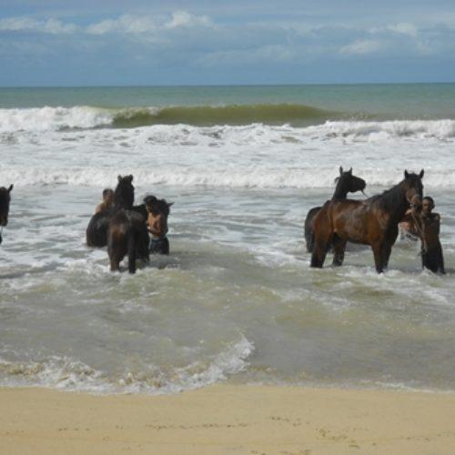 Reiten am Indischen Ozean